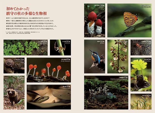 鳥や蛇、昆虫、菌類の写真群